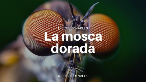 La mosca dorada de Porta Capuana: talismán contra insectos