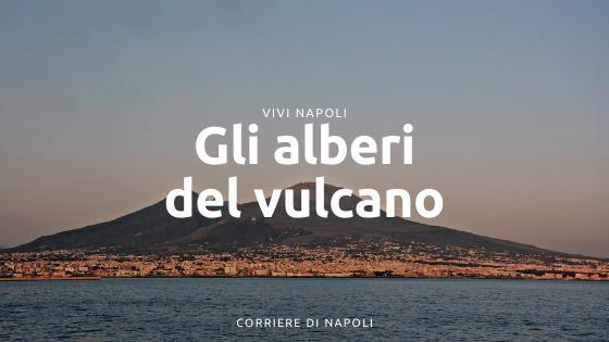 """L'iniziativa del Vesuvio: """"Gli alberi del Vulcano"""""""