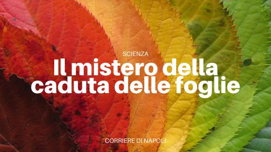La caduta delle foglie: il mistero dell'autunno