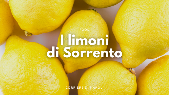 I limoni di Sorrento: un viaggio campano
